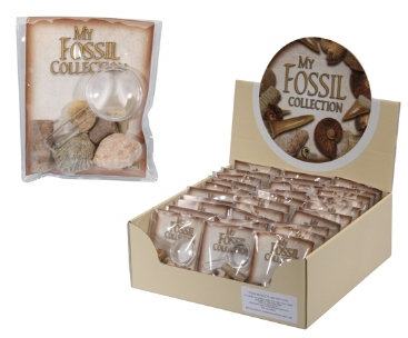 Fossiles avec loupe - à collectionner