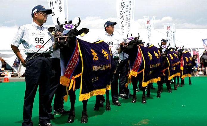Wagyu Olympics.jpg