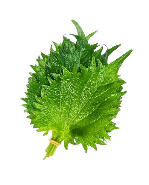 しそ・Shiso from Japan - 10 leaves