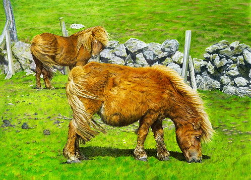 Shetland Ponies Grazing: