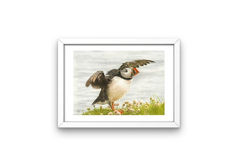 "Puffin Taking Flight: Frame 6x8""  Print A6"