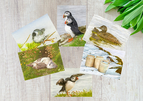 Birds In Nature, Set of 6 Greetings Cards