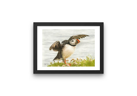 "Puffin Taking Flight: Frame 6x8"""" Print A6"