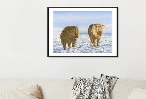 Shetland ponies snow scene.