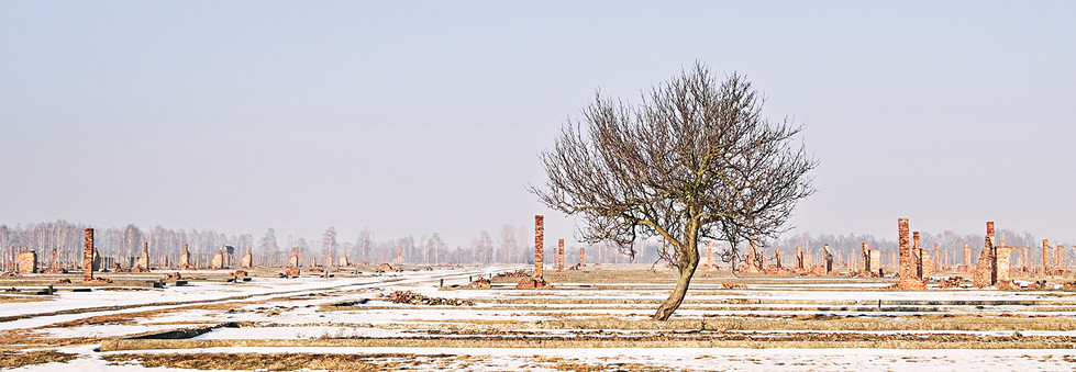 COLOUR - Lonely Tree at Birkenau by Jim McConville (11 marks)