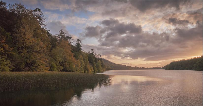 PDI - Sun Kissed Trees by Paul Devenny (7 marks)