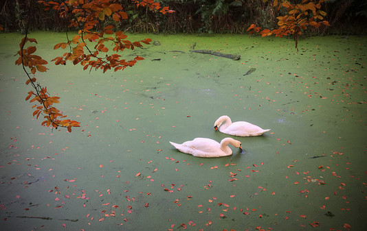 'Autumn on the Lagan' by Martin Spackman - Commended
