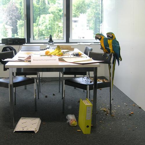 Raumkultur_Papagei.JPG