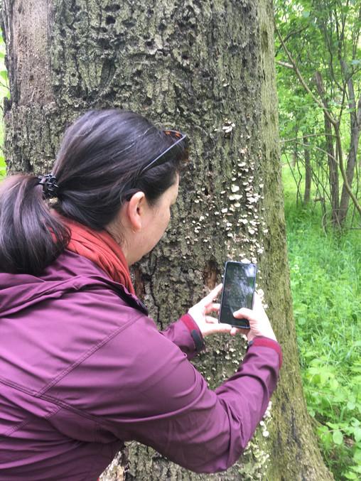 City Nature Challenge at Cobbs Creek