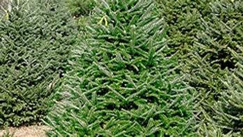 7-8 ft Christmas Tree