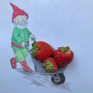 kabouter aardbeien iw