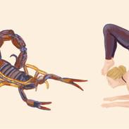yoga schorpioen iw