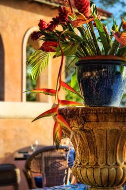 Cafe Luna Barbados flowers
