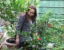 our own organic herb garden