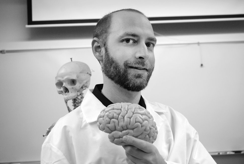 Human Anatomy tutor holding a three dimensional model of a human brain in front of a skeleton