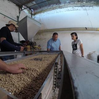 Tamizando muestras de cafe tipo Honey en café de altura