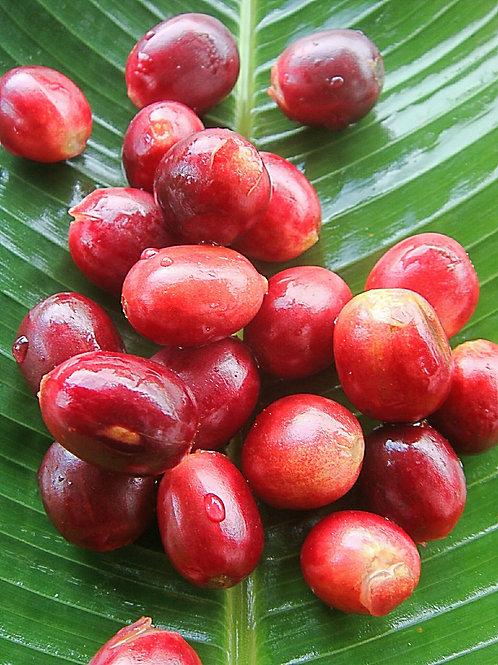 Bourbón Rojo - Natural