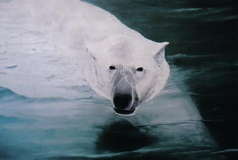 Polar Bear Face to Face
