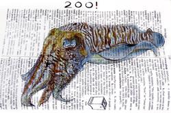 Dictionary Cuttlefish