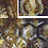 Thumbnail: Diamond Honey