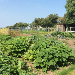 On of our veggie growing areas at Yewcroft
