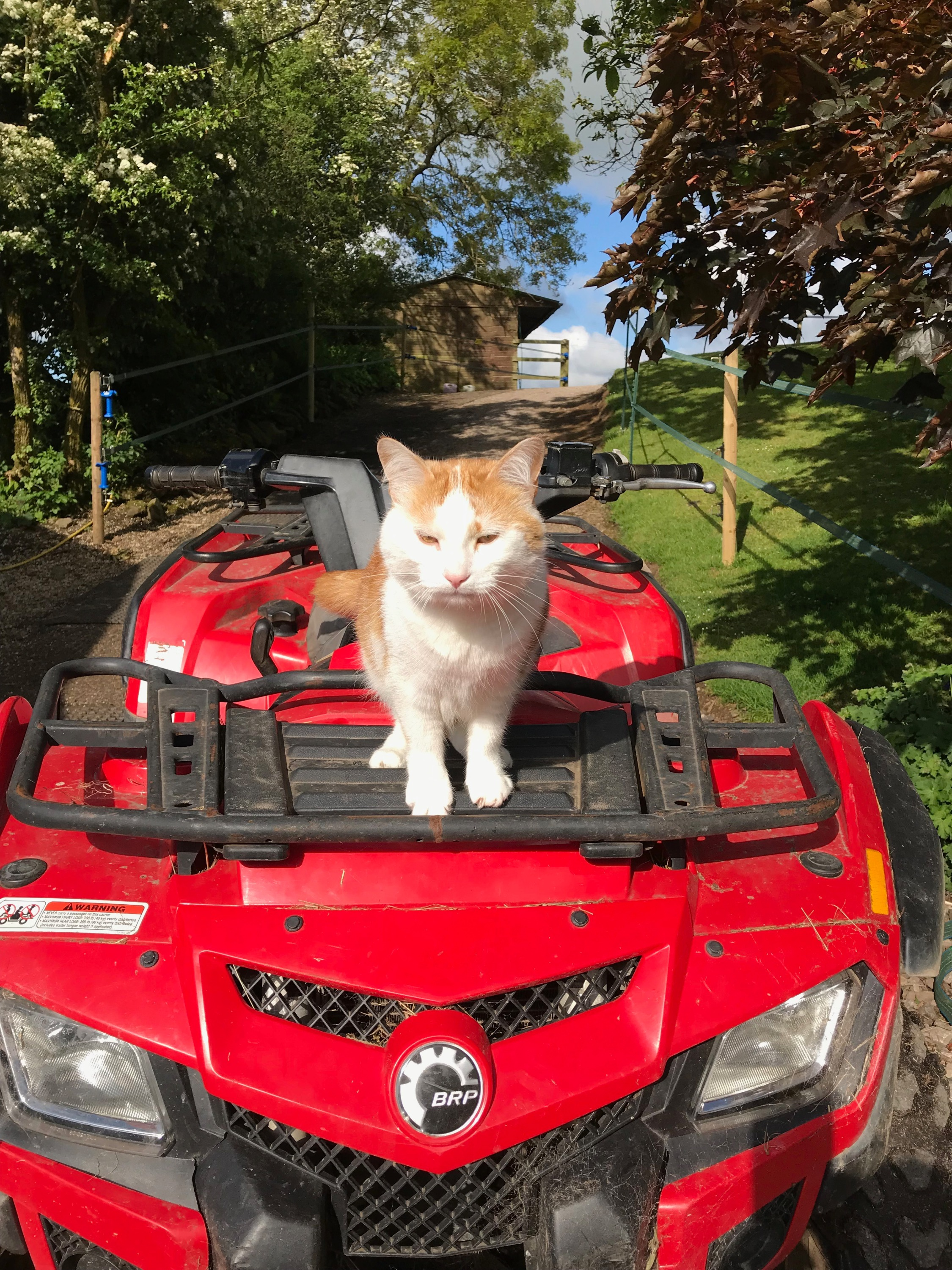 George the rescue cat on the quad