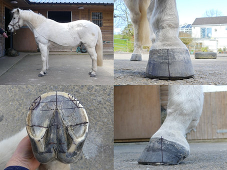 Identifying healthy hoof ideals