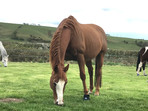 No gut - no foot - no horse! How to support your horses microbiome for soundness and longevity!