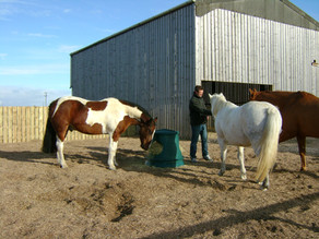 A quick guide to feeding the leisure horse for healthy hooves