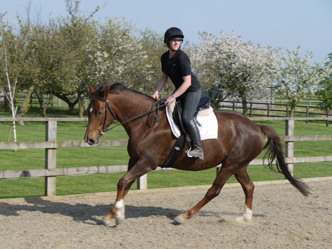Beccy riding Yewcroft herd member Florida