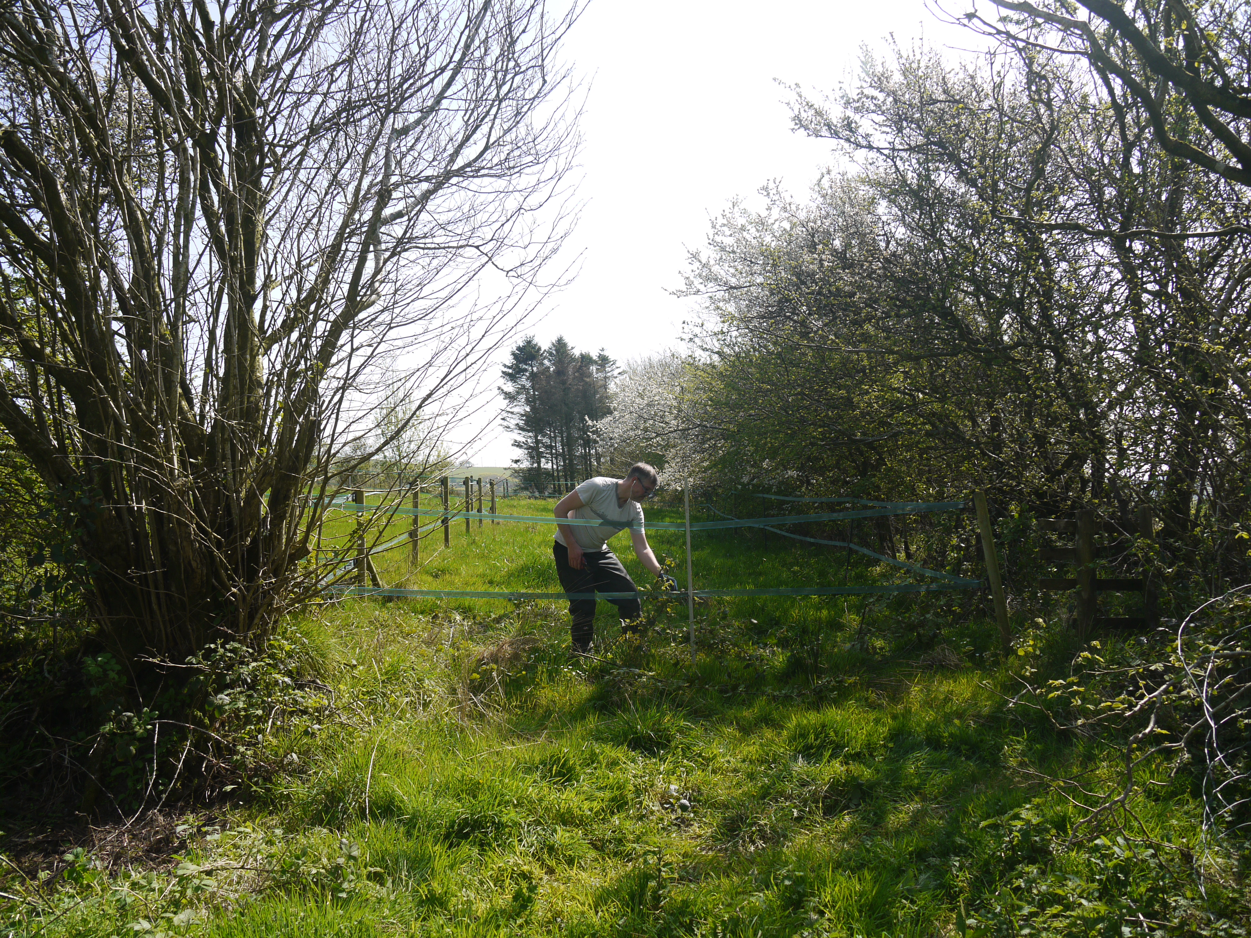 Maintaining the wildlife walk