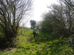 Maintaining the wildlife walk