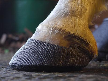 Orthotics for Horses