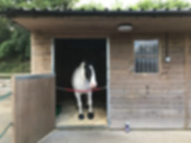 Laminitic horse on box rest