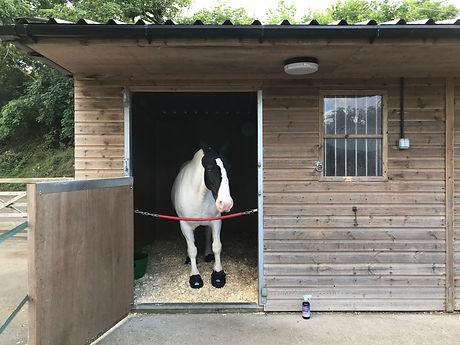 Laminitic horse on box rest