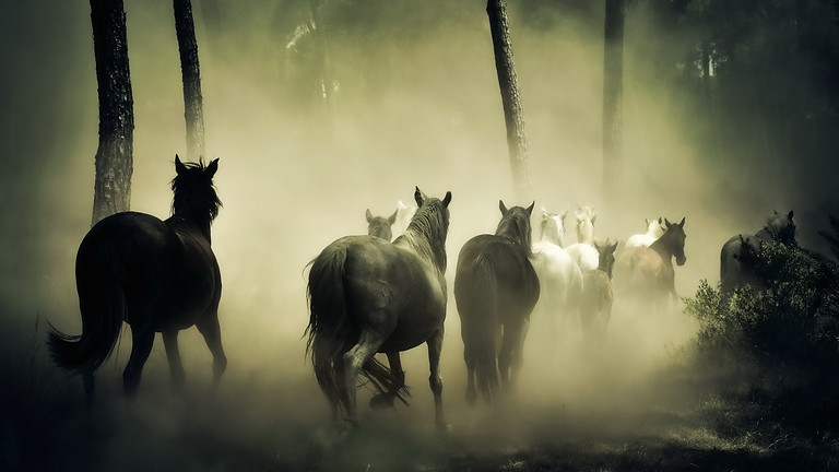 Experts Talk lecture/demo on Healing Horses Holistically