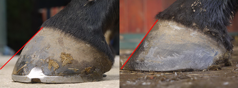 Holistic Reflections helps horses with negative palmar angle syndrome