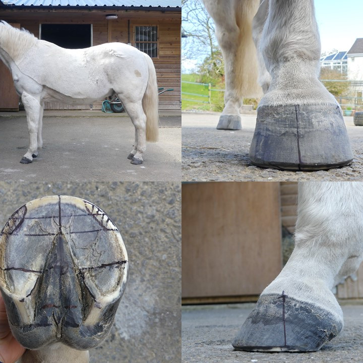 PRO-Active Integrative Hoof Care Event - Day 1 - 18th June 2021