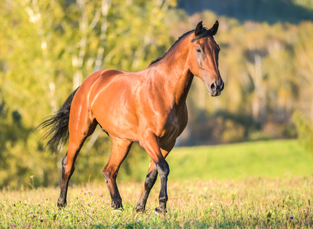 Equiculture - the future of horse keeping!