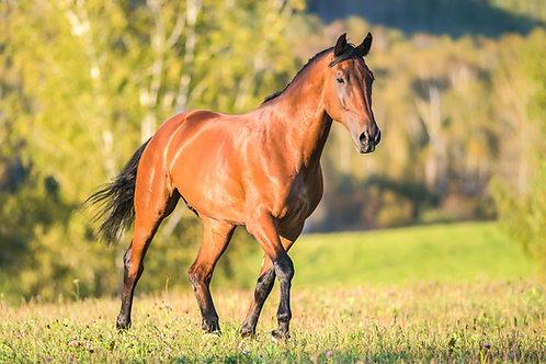 Holistic Horse Wellness Consultation