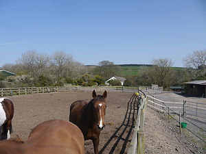 manege and dry lot 1 in background.JPG