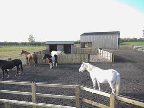 Laminitis, Insulin Resistance, PPID (Cushings Disease) & Metabolic Syndrome in Horses