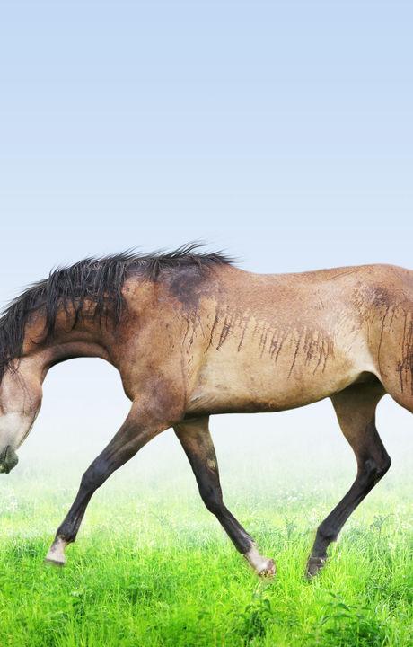 Horse on green field running trot forwar