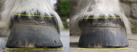 Holistic Reflections helps horses with poor hoof balance