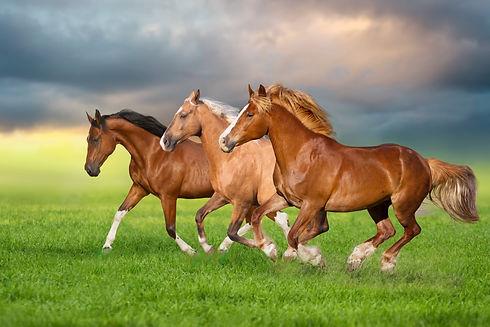 Horse herd run gallop on spring green me