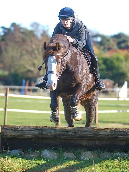 A rider schooling her Welsh Cob horse ov