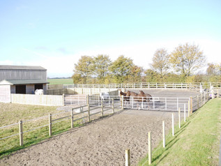 Beccys own design of alternative turnout and management for laminitic prone horses