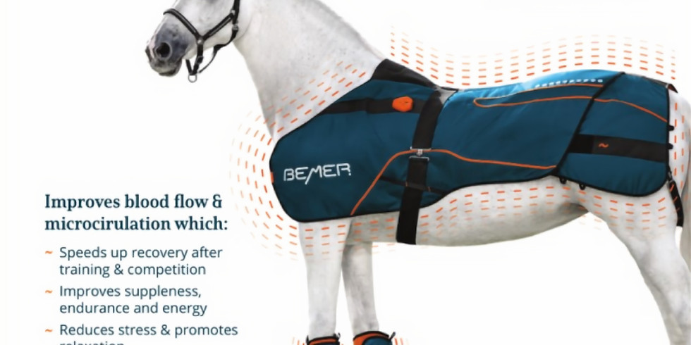 How to improve horses health with BEMER Equine Therapy - talk & live demo