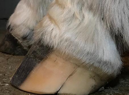 D.E. Hoof Taps for Barefoot Horses?