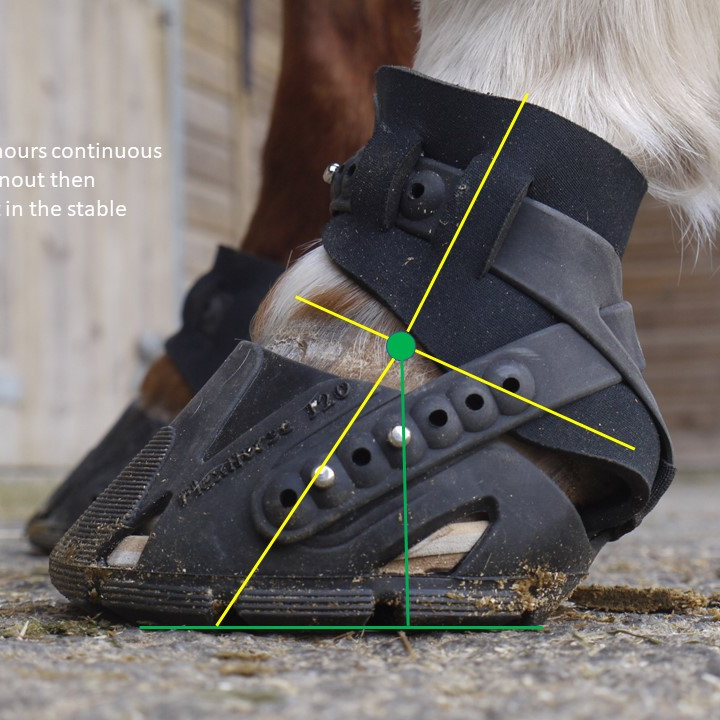 PRO-Active Integrative Hoof Care Event 12th June 2021
